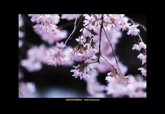 教室 写真 カメラ デザイン 桜